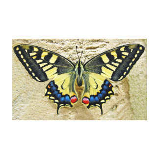 "Tiger Swallowtail Butterfly On Sand 20"" x 12"" Canvas Print"