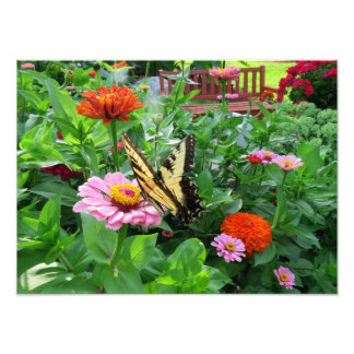 Tiger Swallowtail Butterfly on Zinnia Flower Photo Print