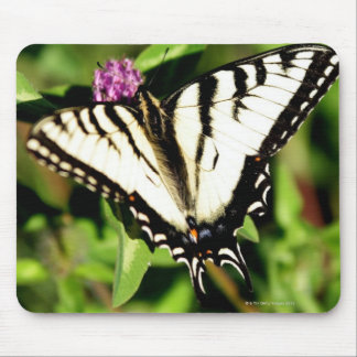 Tiger Swallowtail Butterfly. Papilio glacus. Mouse Pad