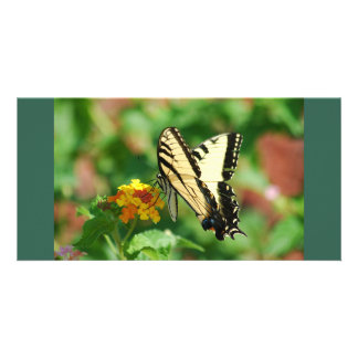 Tiger Swallowtail Butterfly Personalised Photo Card