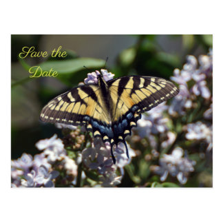 Tiger Swallowtail Butterfly Save the Date Postcard