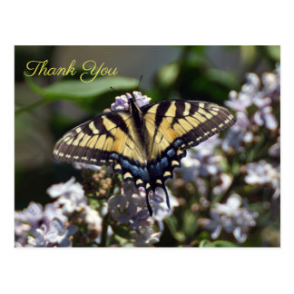 Tiger Swallowtail Butterfly Thank You Postcard