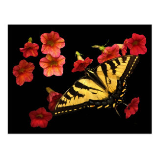 Tiger Swallowtail on Red Flowers Postcards