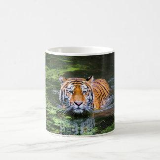 Tiger Swimming Mugs