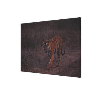 Tiger Walks along Trail Canvas Print