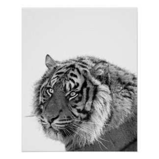 Tiger wild animal photo black and white nursery poster