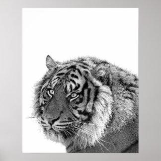 Tiger wild animal photo black and white nursery poster