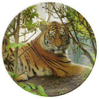 Tiger Wildlife Porcelain Plate