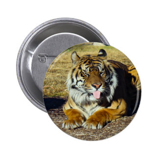 Tiger with a 'tude Round Button