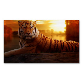 Tiger with Sunset Magnetic Business Card