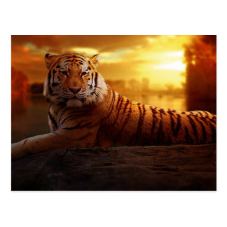 Tiger with Sunset Postcard