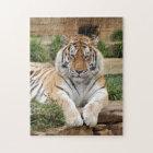 tigers-4-8 jigsaw puzzle