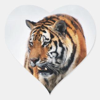 Tigers wild life stickers