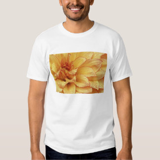 Tight in photographs of Dalhia flower with the 2 T Shirts