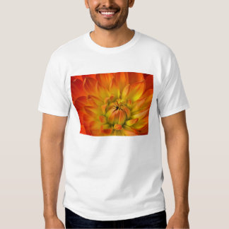 Tight in photographs of Dalhia flower with the Shirts