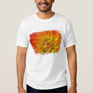 Tight in photographs of Dalhia flower with the T-shirt