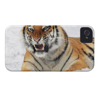 Tigre iPhone 4 Cover