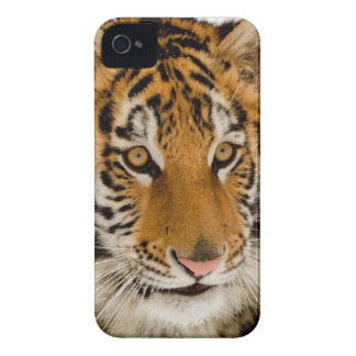 Tigre iPhone 4 Covers