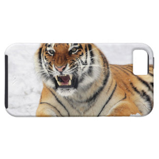 Tigre iPhone 5 Cover