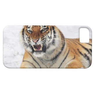 Tigre iPhone 5 Covers