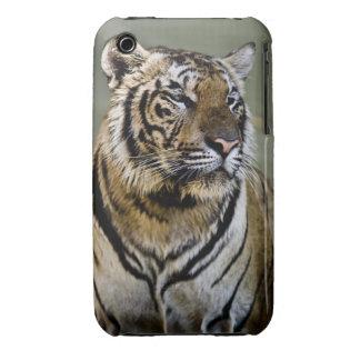 Tigre Tailandia iPhone 3 Case-Mate Protector