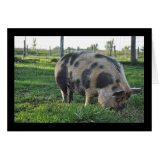 Tima the KuneKune Pig Card
