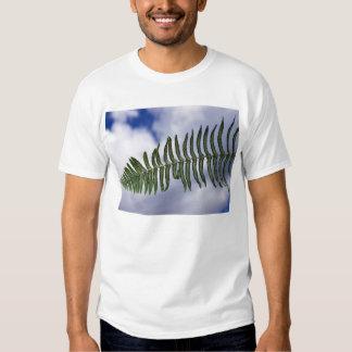 timber t-shirts
