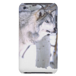 Timber Wolf, Canis lupus, Movie Animal Utah) Barely There iPod Cover