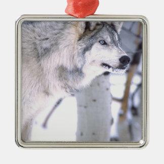 Timber Wolf, Canis lupus, Movie Animal Utah) Christmas Tree Ornaments