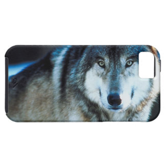 Timber Wolf iPhone 5 Cover
