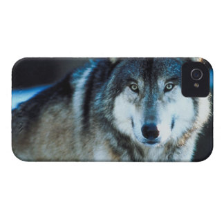 Timber Wolf iPhone 4 Case-Mate Case
