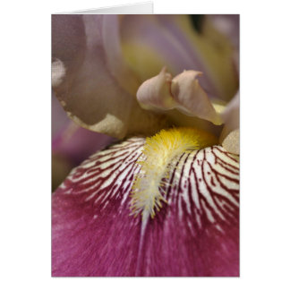 Time to eat - Iris Flower Blank Card