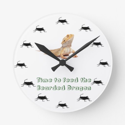 Time to feed the Bearded Dragon Clock