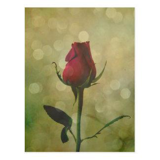 Timeless Love Shared Red Rose Bud Sparkle Postcard