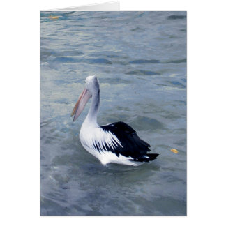 Tin Can Bay Pelican Card