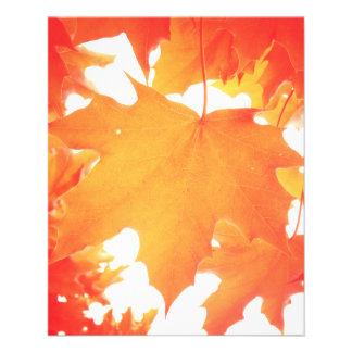 Tinted Orange Maple Leaf Flyer