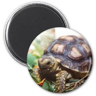 tiny 6 cm round magnet