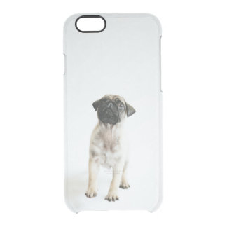 Tiny And Cute Pug Puppy Clear iPhone 6/6S Case