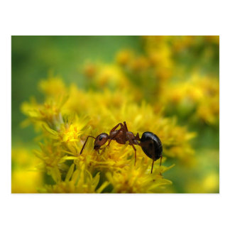 Tiny Ant on Goldenrod Postcard