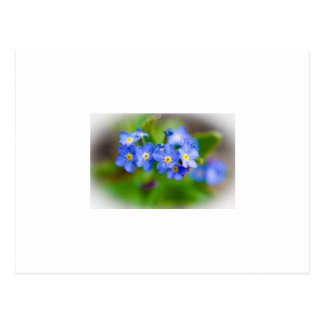 Tiny Blue Flowers Postcard