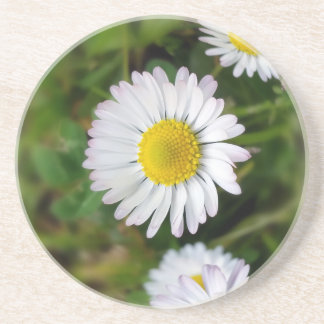 Tiny daisies beverage coaster