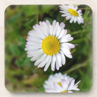 Tiny daisies drink coasters