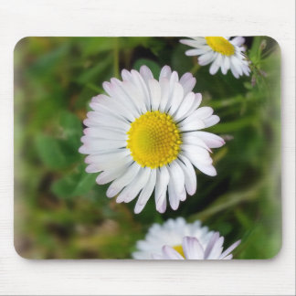 Tiny daisies mouse pad