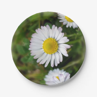 Tiny daisies paper plate