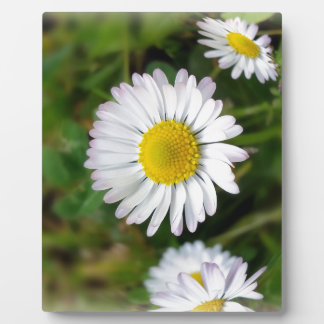 Tiny daisies plaque