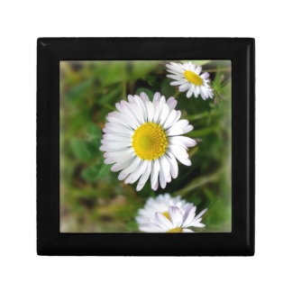 Tiny daisies small square gift box
