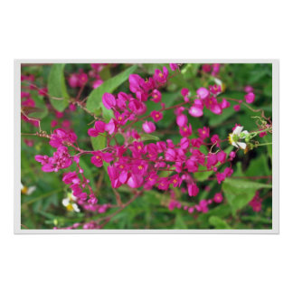 Tiny Dark Pink Flowers Poster