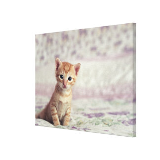 Tiny Ginger Kitten Gallery Wrapped Canvas