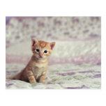 Tiny Ginger Kitten Postcard