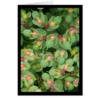 Tiny Green Flora- Song of Sol. 8:7 Greeting Card